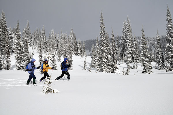 cross-country-ski